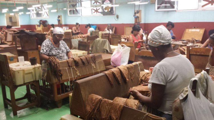 trabajadoras en fábrica de tabaco