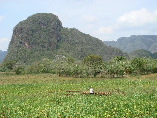 campo de tabaco en Viñales